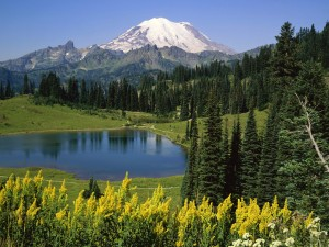 natural_beauty_mount_rainier_national_park_washington_us